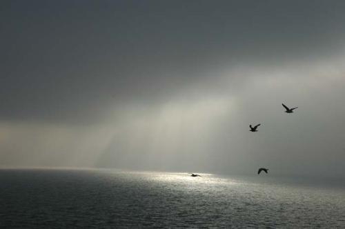 Himmel og hav - brutto (88)